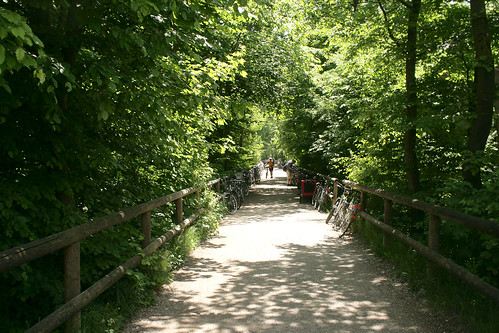 Waldweg an den Isarauen