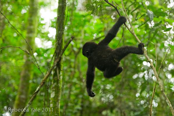 RYALE_Rwanda_Uganda_Safari-122