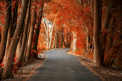 fall-path-provo-river
