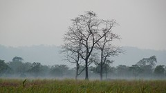 Twilight descends on Kaziranga (tomato umlaut) Tags: india landscape twilight assam kaziranga digitalcameraclub