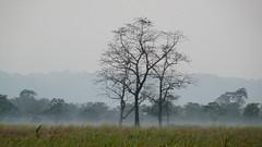 Twilight descends on Kaziranga
