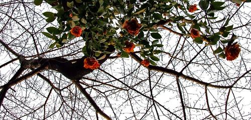 rosas y ramas