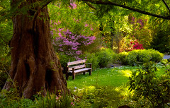 Sitting Bench in Spring Meadow (Abe K) Tags: california flowers garden bench spring nikon sitting marin center bloom d1x