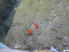 """Fishes • <a style=""""font-size:0.8em;"""" href=""""http://www.flickr.com/photos/36178200@N05/3390707863/"""" target=""""_blank"""">View on Flickr</a>"""