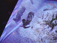 aquarium myrtlebeach ripleys