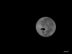 Silent visitors during the night !!! (saternal) Tags: moon photoshop blackwhite surreal imagination parachute glide photoshopwork saternal