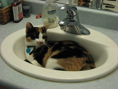 Snickers in Sink