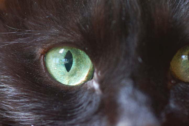 Self Portrait In Maggie's Eye