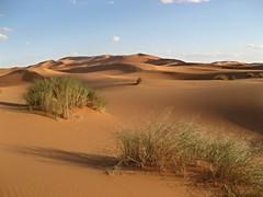 Erg Chebbi sandscape with desert grasses, Northern Sahara, Morocco (ali eminov) Tags: sanddunes sandscapes deserts sahara northernsahara ergchebbidunes morocco lemaroc myloveformorocco maroc northafrica