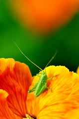 insectDSC_5640