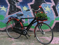 Geranium delivery by drooderfiets