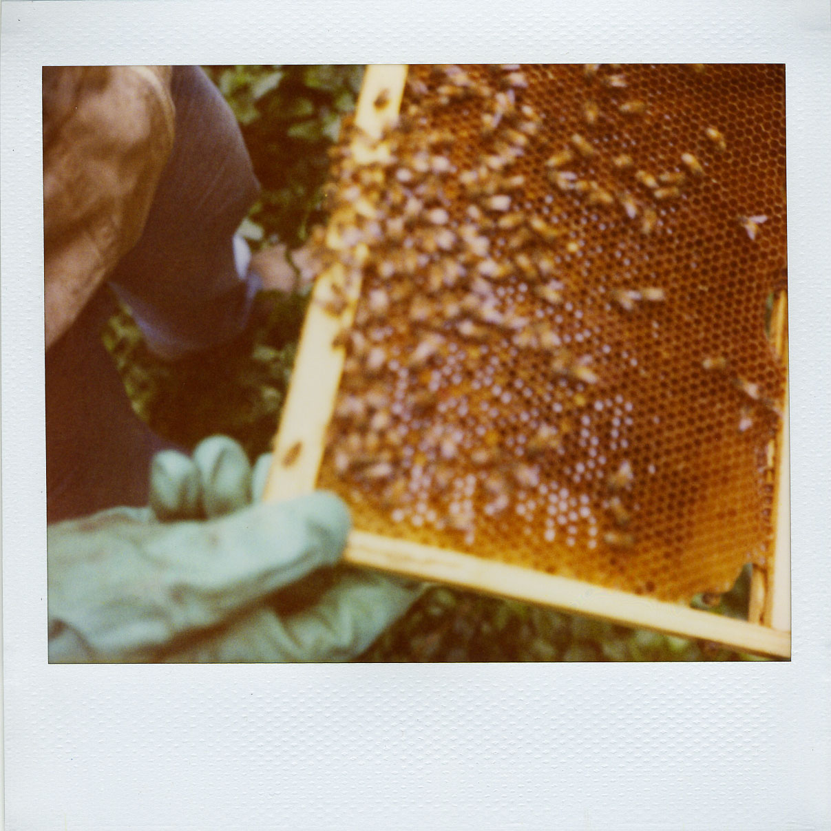'roid week 2009: beekeeping (tues)