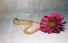 Ehhhhh (jami_lee) Tags: pink flower purple bokeh pearls texure hbw