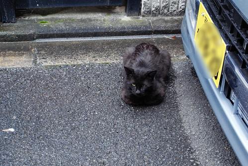 Today's Cat@20090522