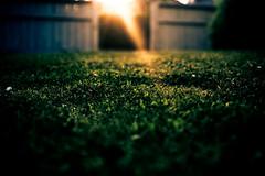 Close To Perfect (Rutger Blom) Tags: sunlight lund flower green public grass sunshine fence groen sweden bokeh lensflare blomma gras sverige hek zonlicht bloem zweden grn grs staket fav10 zonneschijn solsken solljus kobjer yearbook2009