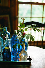 Blue Bottles and Flowers (nataliyagosselin) Tags: flowers blue window kitchen table chair bottles luna parc backlighting