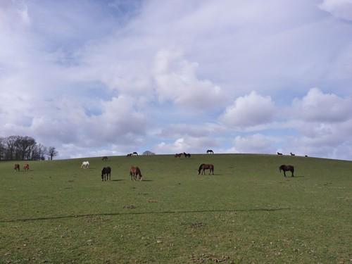 smal-horses-pre-midhurst-rohan