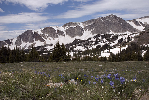 Wildflowers in the Snowies