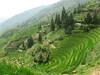 Risaie terrazzate di Ping An