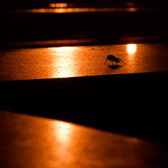 Roach Resort (chrismar) Tags: vacation orange delete10 bar canon bug delete9 outside 350d delete2 hotel delete6 delete7 delete8 delete3 delete delete4 save save2 september resort atlantis blogged rebelxt bahamas 1785mm roach 2009 paradiseisland dmu