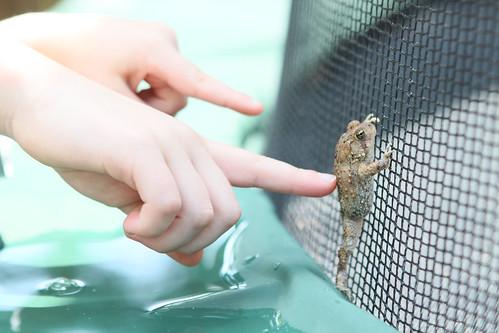 frog poke