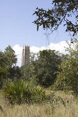 The Tower Seen from Pine Ridge Trail