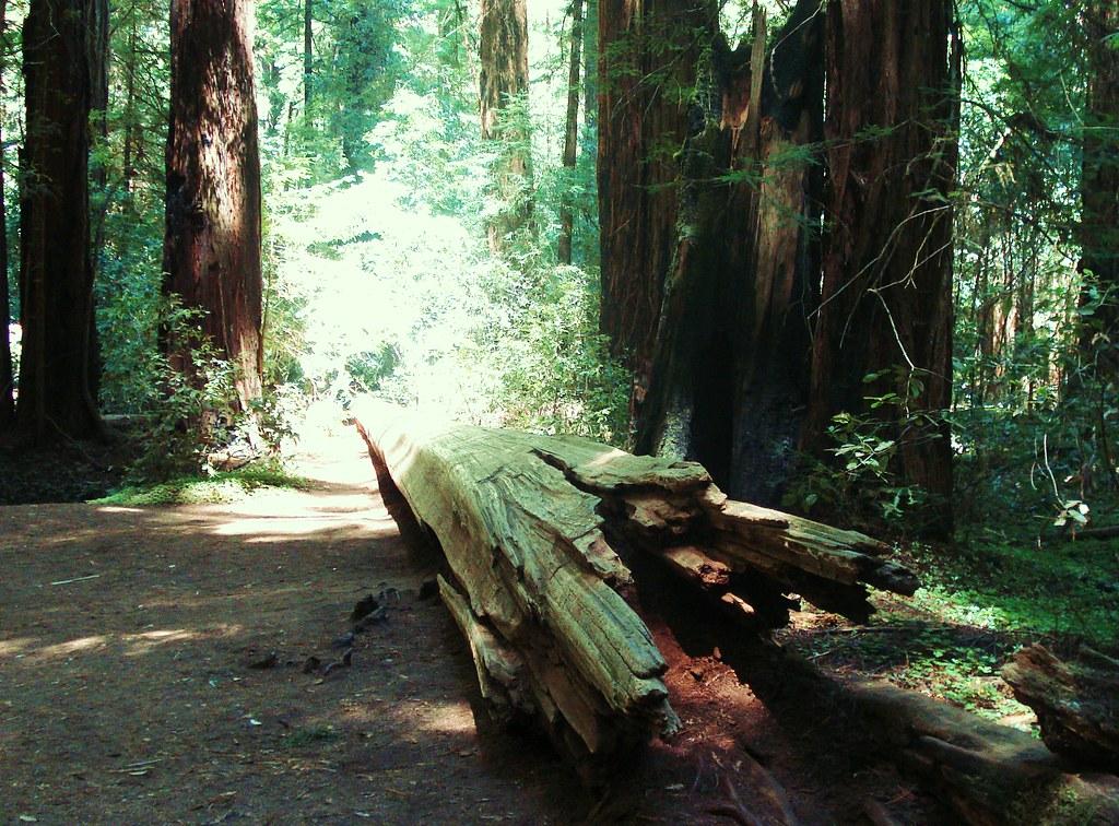 redwoodcorpse