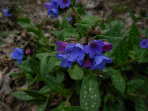 garden 2009 015