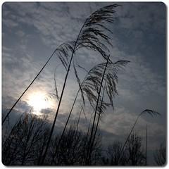 Spring | Dramatic Grass (fxp) Tags: trees lake reflection nature water beautiful grass germany geotagged deutschland spring cologne köln deu nordrheinwestfalen lostplace scheuerhof flittard aplusphoto geo:lat=5100398450 geo:lon=701092025