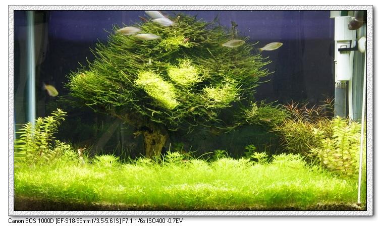 阿勝種的樹1