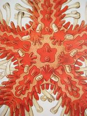 Ernest Haeckel24 (Neville Trickett) Tags: sea art nature visions science creatures oceanography haeckel enest