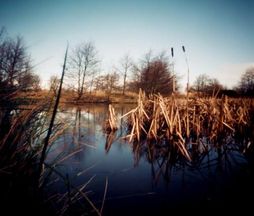 Reeds in pond Eglinton 20Mar09