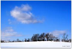 Call Of The Champions (Ronaldo F Cabuhat) Tags: travel blue trees winter vacation snow cold ice clouds frost freezing bluesky powderblue winterwonderland hite winterinny canoneosdigitalrebelxti pinoykodakero cabuhat feurabushny callofthechampions