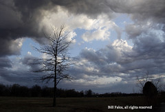 Stormy Landscape _MG_2220R (CP Images) Tags: sky tree nature rain weather clouds canon outdoors spring land kansas storms kansasthunderstorm cpimages