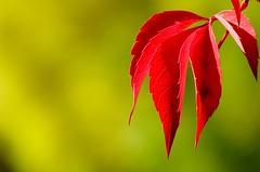 otoño mendocino (.el Ryan.) Tags: argentina may mendoza chacrasdecoria