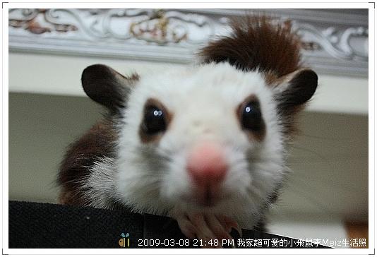 09年二三月小飛鼠Meiz生活照 (13)
