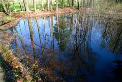 Meadow Farm Pond