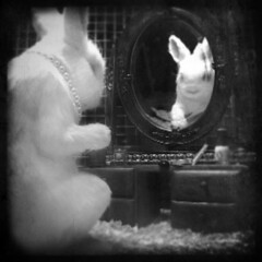 rabbit reincarnate (B.S. Wise) Tags: blackandwhite bw newyork reflection rabbit bunny art public photography mirror photo necklace vanity banksy squareformat imagination pearl flickrcentral blancinegre utterlysurreal bradwise lynched bradswise fauxvintage dreamalittledream fl