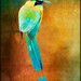 """ Blue-crowned Motmot"""