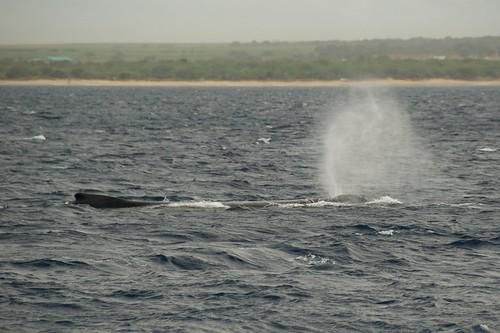 Maui-2009 190