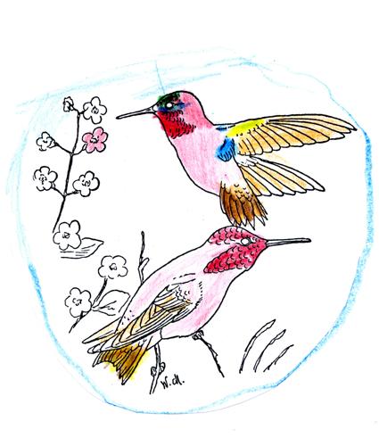 Rufous Hummingbird -- by JDBoy age 6