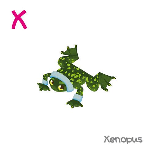 Xenopus #3
