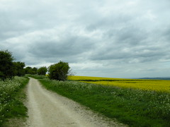 The Ridgeway in spring