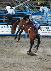 Rodeo 6-Cody (Wyoming) Stampede (McKDave) Tags: rodeo wyoming cody stampede