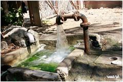 الماء (banijamrah) Tags: المزرعة الشجر الماء مجرى الزرع الساب كرانة كرانه