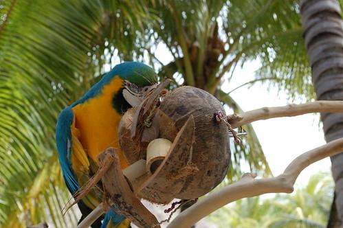 Coconut Toys 61