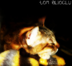 The Day..! My Cat Was Born Today ©