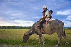 Humility (B2Y4N) Tags: family grass rural philippines farmer ricefield province cagayan carabao aparri waterbuffallo provinciallife magapit staana magsasaka b2y4n bryanrapadas