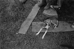 La Perrica, Mxico (www.rojoverdeyazul.es) Tags: perro pies contento