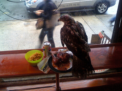 Hawk.  On my lunch.